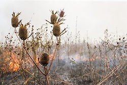 Presecribed burn at Clymer Meadow Preserve near Greenville, Texas.  The Preserve is one of the largest and most diverse remnants of the Blackland Prairie.  It is administered by the Nature Conservancy.