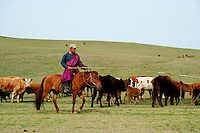 Horseman runs his flock of sheep in the steppes outside of Ulan Bator Mongolia. Nomadic people move from one place to another, rather than settling permanently in one location. Nomads in Mongolia are usually of the pastoral type following seasonally available wild plants and game, moving with them in ways that avoid depleting pastures beyond their ability to recover.