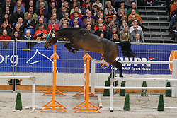 389 - Chapeau<br /> KWPN Hengstenkeuring 's Hertogenbosch 2010<br /> © Dirk Caremans