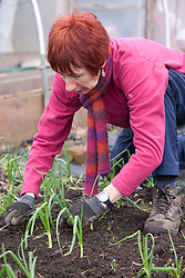 Woman and girl weeding on an allotment.