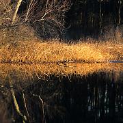 The Sudbury River, Lincoln, MA