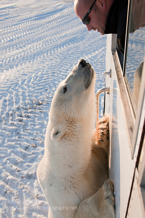 Man and polar bear meet face to face in the high Arctic in Canada.  There is no doubt that food is on the bear's mind