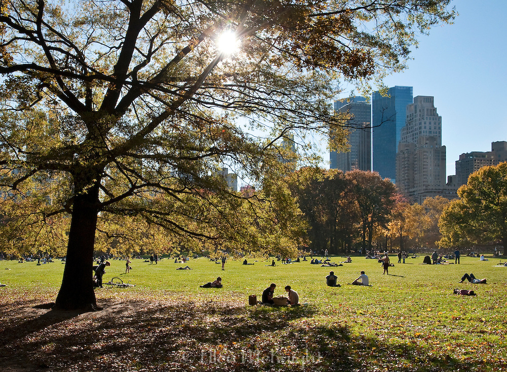 The sun starts to set over Sheep Meadow in Central Park, New York City on a warm autumn day.