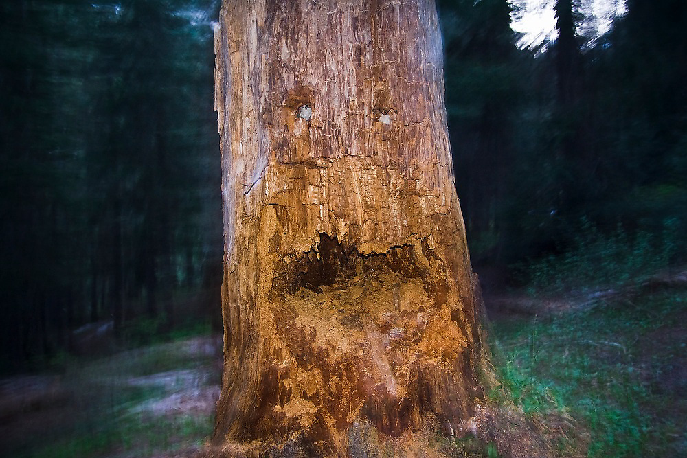 A tree trunk monster face long the trail to Spider Meadows, Wenatchee National Forest, Washington.