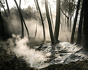 After a vast forest fire, a firefighting truck hoses a mix of pressured water and wetting agent deep into the ground. The lower part of the humus is still smoldering and ejecting smoke and CO2, so it's important to reach deep in the ground.<br /> Near Bordeaux, France