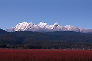 The Golden Ears Mountains from the farmland of Pitt Meadows (Blueberries).  Mount Blanshard, Edge Peak, Blanshard Peak, and Alouette Mountain make up the Mount Blanshard massif in British Columbia.  Photographed from Pitt Meadows, British Columbia, Canada