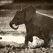 """""""Puddles""""                                                       Tanzania<br />  One puddle, one kid, one constant. Splash!"""