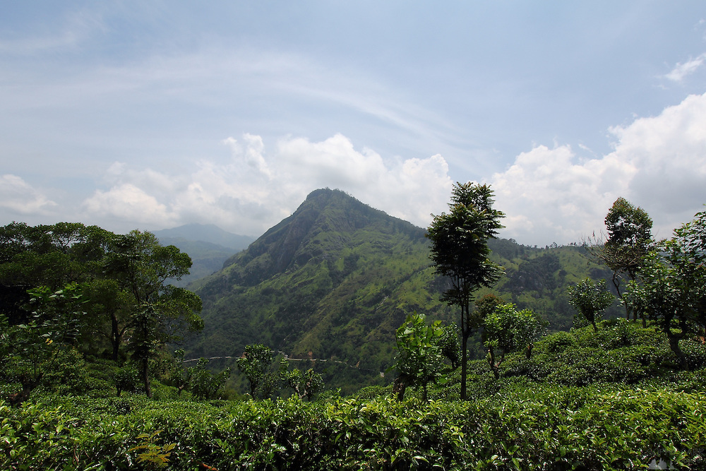 The view from tea plantations near Little Adam's Peak, above the hill country village of Ella, in central Sri Lanka
