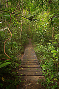 Landscape with a boardwalk inside of a lush green rainforest, Indio Maiz Biological Reserve, Nicaragua