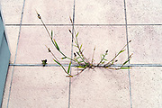 wild grass growing in bwtween the cracks of the floor outdoors