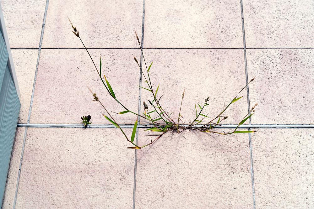 wild grass growing in bwtween the cracks of the floor outdoors