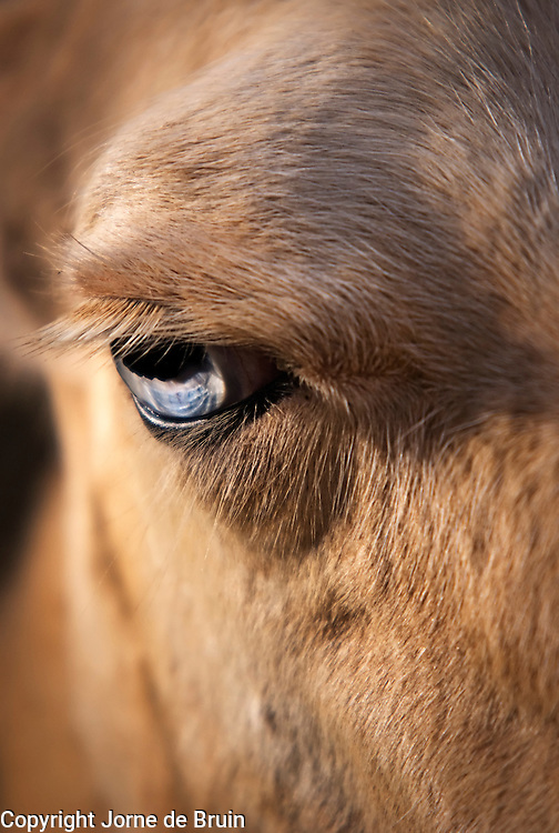 A close up of a Llama's face in the Wildlife Park Cabárceno in Spain.