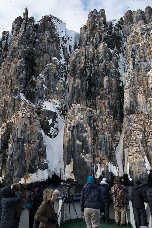 Alkefjellet Bird cliffs & Tourists<br /> Brunnich's Guillemot<br /> (Uria lomvia)<br /> Spitsbergen<br /> Svalbard<br /> Norway<br /> Arctic Ocean