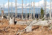toter Wald auf dem Rachel, Nationalpark Bayerischer Wald, Bayern, Deutschland | dead forest on lake Rachel, national park Bavarian Forest, Bavaria, Germany