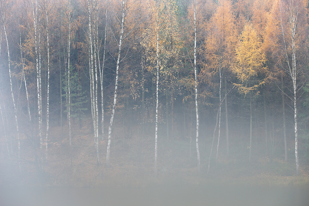 FOREST IN AUTUMN. KRASNA LIPA. CESKE SVYCARSKO. CZECH REPUBLIC.