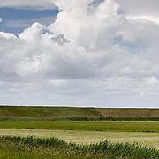 Nederland Walsoorden   gemeente Hulst  19 juni 2010 20100619     ..  Serie landschappen provincie Zeeland. Zeeuws-Vlaanderen, landschap polderlandschap scenery met op de achtergrond de dijk van de westerschelde.   wisselvallig veranderlijk weer. Op de voorgrond een rietkraag, riet. Illustratief beeld  waterveiligheid, hollandse landschappen., stilte, stock, stockbeeld, streek, sunny, sustainable, terrein, typerend, typical dutch landscape, typisch hollands, typisch hollands landschap, typische, uitgestrektheid, uitzicht, uniek, unieke, veiligheid, veld, vergezicht, vergezichten, verte, vrij, vrijheid weer, waaien, water level, waterbeheer, Waterbeheerplan, waterhuishouding, waterkering, waterkeringen, Waterkeringen, waterlevel, watermanagement, waterniveau, waterpeil, waterplan, waterproblematiek, waterstaatkundige, waterstand, watersysteem, waterveiligheid, waterveiligheid en gebiedsontwikkeling, waterwerken, weersomstandigheden, wei, weide, weidegang, weiland, weiland. Landscape, wijdheid, wijds, wijdsheid, wind, wit, witte, wolk, wolken, wolkenpartij, zeeland, zeeuws vlaanderen, zeeuws-vlaanderen, zeewering, zo vrij als een vogel, zonnig, zonnige dag, zware, zwitserleven gevoel  ..Foto: David Rozing