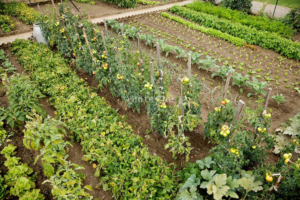 a home vegetable garden