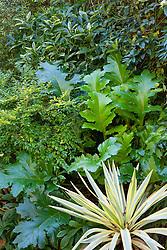 Yucca gloriosa Bright Star = 'Walbristar' with Acanthus mollis 'Hollard's Gold', Ligustrum ovalifolium 'Lemon and Lime' and Aucuba japonica 'Sulphurea Marginata'