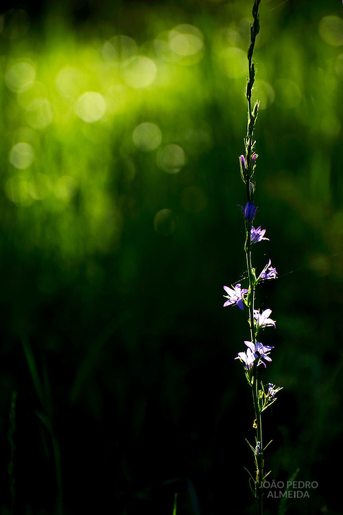 Small flowers under ray of light in the shadows