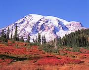 autumn meadow on Mt Rainier, Mt Rainier National Park, Washington State