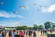 The gulls scavange for waste food over the Left Field. Sadly there is plenty to find. The 2013 Glastonbury Festival, Worthy Farm, Glastonbury.  © Guy Bell, guy@gbphotos.com, all rights reserved