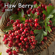 Hawthorn Berry   Haw Berries Pictures Photos Images & Fotos