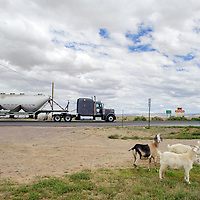 082014       Adron Gardner<br /> <br /> Animal and machine pass each other near Tohatchi on U.S. highway 491 construction Wednesday.