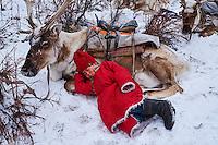 Mongolie, province de Khovsgol, les Tsaatans, éleveurs des rennes, transhumance hivernale, l'heure de la pause  // Mongolia, Khovsgol province, the Tsaatan, reindeer herder, winter migration, time for rest
