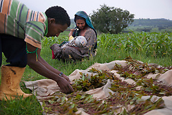 Fifteen-year-old Destaye nurses her son near their home in Bahir Dar, Ethiopia on Aug. 9, 2012. Destaye and her husband Addisu, 27, divide their time between working in the fields and taking care of their 6-month-old baby. Like many other young couples, they tend to the domestic, economic and personal demands of being young parents. At the time of their marriage, when Destaye was age 11, she was still in school and her husband expressed interest in letting her continue her education. Since the birth of their son, however, she has had to confine her life exclusively to being a wife and mother.