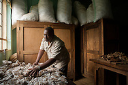 Dr. Augustin Basabose, founder and executive director of Primate Expertise examines dried and bagged gorilla feces at the Centre de Recherche en Sciences Naturelles  just outside of  Kahuzi-Biega National Park in Lwiro, South Kivu, D.R. Congo.
