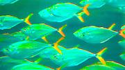 Abstract of fish, Charleston South Carolina Sea Aquarium