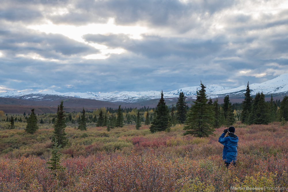 Woman using binoculars to search for wildlife, fall, Denali National Park, Alaska