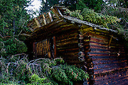 Collapsed roof of a farmer's barn by fallen pines after summer storms in a forest above Badia-Abtei in the Dolomites region of south Tyrol, Italy.