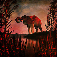 An elephant stands over a pool of water on what is likely a very hot day. This scene depicts the majestic, powerful creature in midst of getting a cool drink. It stands among some beautiful long grass, and this acryl on canvas piece puts this scene against a stunning backdrop of brilliant colors. The elephant is unaware that we are watching it drink. Or it doesn't care. This simple, yet powerful scene simply allows the elephant to exist. It is going to drink its fill, and then move on. Available as wall art, t-shirts, or as interior home décor products. .<br /> <br /> BUY THIS PRINT AT<br /> <br /> FINE ART AMERICA<br /> ENGLISH<br /> https://janke.pixels.com/featured/the-drinking-elephant-jan-keteleer.html<br /> <br /> WADM / OH MY PRINTS<br /> DUTCH / FRENCH / GERMAN<br /> https://www.werkaandemuur.nl/nl/shopwerk/Dierenrijk---De-drinkende-olifant/437148/134