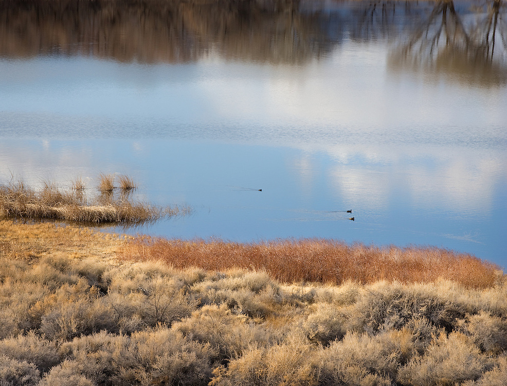 Wintering Ducks in Late Afternoon at Pahranagat National Wildlife Refuge.