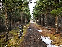 Mountain bike on a small path in Heiðmörk forestry area in Reykjavík, Captial of Iceland. Fjallahjól við stíg í Heiðmörk.