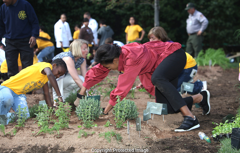 First Lady Michelle Obama helps to plant the White House Kitchen Garden on the South Lawn of the White House with student from the Bancroft Elementary School in Washington D.C. on April 9, 2009.  Student Santana Holmes on left and Michelle Pisqui on the right. Photograph:Dennis Brack