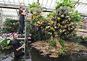 ©London News pictures. 03.02.2011. Tsuyeko Western (Top) and Anne Rostek (bottom) add the final orchids to a display in the tropical glasshouse at Kew Gardens today (Thur). The launch of Kew Garden's Tropical Extravaganza. This theme celebrates the fact that 2011 has been designated the Year of the Forest by the UN. It is attempting to celebrate the rainforests' beauty as well as highlight the dangers that they are facing. The display includes varieties of Orchids, Anthuriums, Tillandsias and Aechmeas. Picture Credit should read Stephen Simpson/LNP