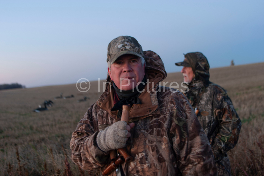 Duck hunting at dawn hunkered down for camouflage on a hilltop south-east of Minot, North Dakota, United States. The duck hunters travel in the dark to the place they suspect will be the morning feeding roost for ducks. As the sun comes up they have prepared decoys in the field and hide behind some undergrowth in their camouflage clothing. As the sun rises soem ducks take to the air for their morning feed. As they draw near the hunters make female and feeding duck calls to attract the flying birds towards the decoys and to within shooting range. The moment they are close enough the hunters quickly take aim anf fire their shotguns; some of the ducks fall to the ground. A great deal of work and effort goes into this type of shooting, with the result being a few fine Mallards for the pot.