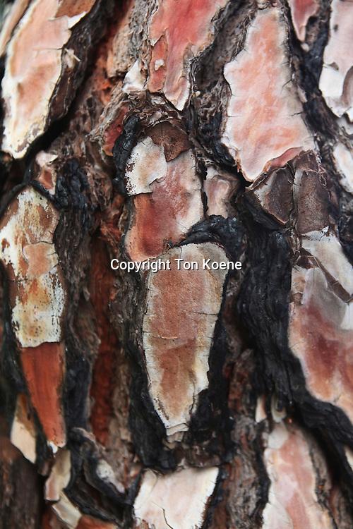 burned tree on la palma