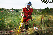 A Lebanese female BAC ( Battle Area Clearing) Team worker from the Danish NGO Danish Churcjh Aid at work in the field.  The yellow stick is a metal detector giving out high pitch noices, a higher pitch means metal - which means a potential cluster bomb.<br /> The Danish Church Aid train local men and women to clear the huge number of cluster sub-munition left on the ground after the Israeli invasion and bombings in 2006.<br /> South Lebanon.
