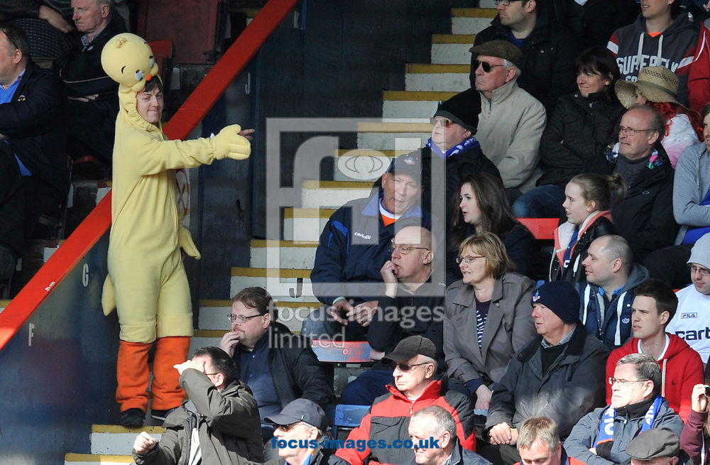 Picture by Alan Stanford/Focus Images Ltd +44 7915 056117.27/04/2013. Oldham Athletic  fan wearing fancy dress for the last game of the season during the npower League 1 match at the Matchroom Stadium, London.. .