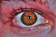 Extreme closeup of a human eye- Brown