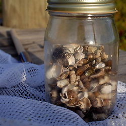Seashells are collected in a jar from the beach of the Ammar family farm...Photo by Susana Raab