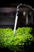 Belo Horizonte_MG, Brasil...Agua saindo da torneira para lavar alface...Water is washing lettuce...Foto: NIDIN SANCHES / NITRO