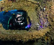 Lionfish, USCGC Spar Shipwreck, NC