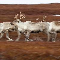 Arctic Norway Full