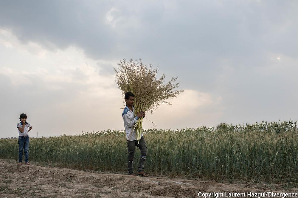 Trafic d'épouse 11032019. Haryana. Biwhat district. Village. Vie quotidienne dans les villages.