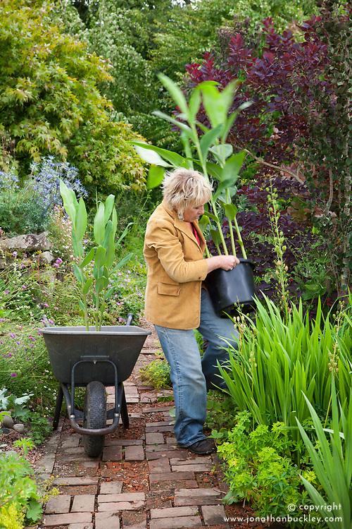 Carol Klein placing pots of hedychium in the hot border