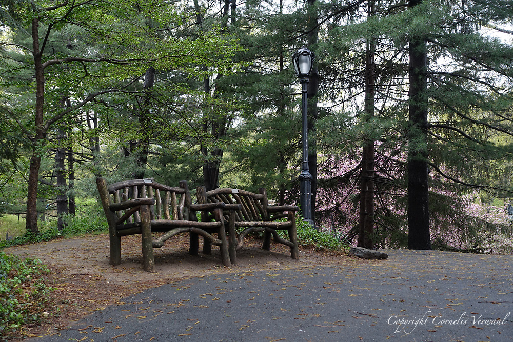 Rustic benches on the hill path between the Boathouse and Bethesda Terrace in Central Park.